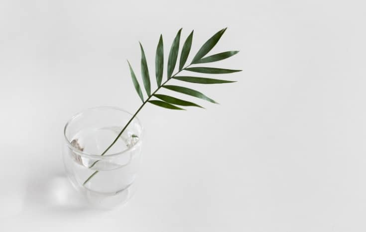 Minimalist style | Palm in cup of water with white background