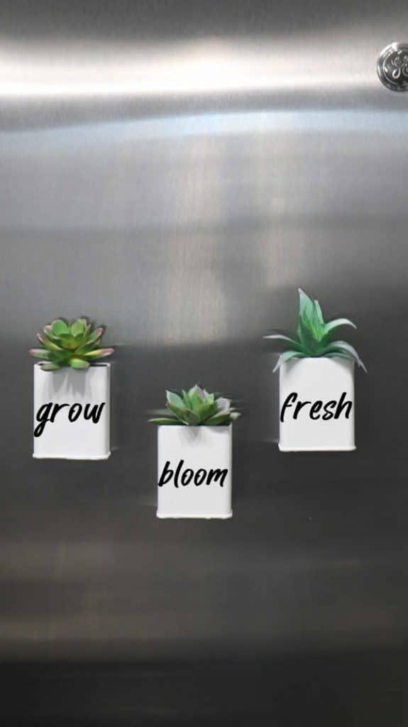 DIY Succulent tins