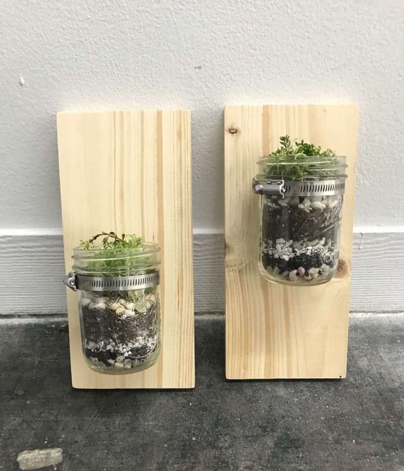 DIY Wall Mounted Mason Jar Planters